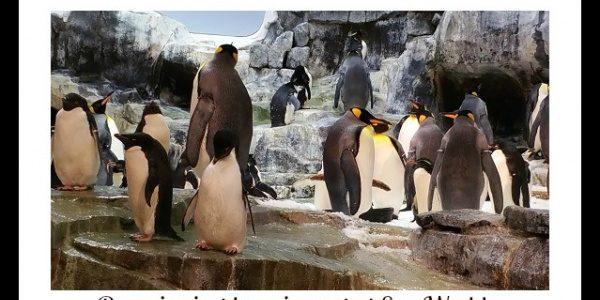 Busch Gardens, Sea World and Discovery Cove offer some great tours