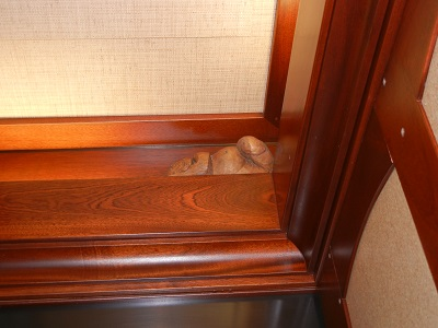 Menehune sleeping in the elevator