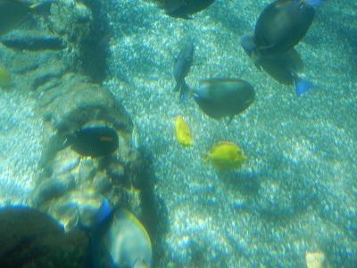 Rainbow Reef residents