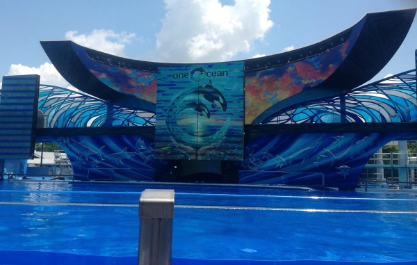 This is the Sea World show to see