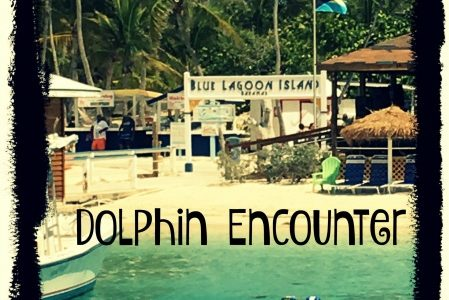 Blue Lagoon Island – Dolphin Encounter