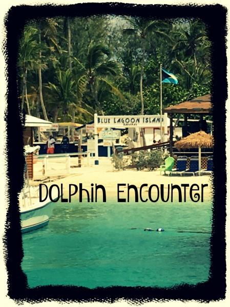 Blue Lagoon Island – Dolphin Encounter