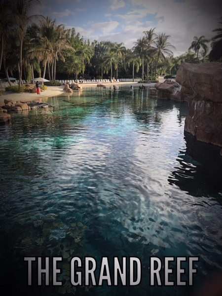 Discovery Cove is a Piece of Paradise in Orlando