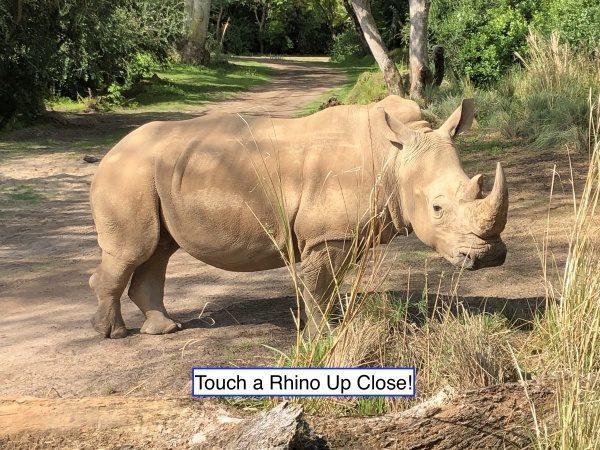 Meet a Rhino