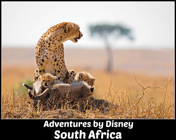 Adventures by Disney South Africa Safari vacation