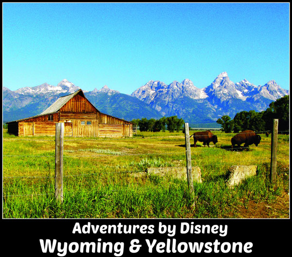 Adventures by disney Wyoming and Yellowstone guided tour